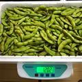 毛豆 (選別品)約1,200g | 約1,200g