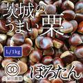 茨城のうまい栗(ぽろたん) Lサイズ(約1kg/約48個) | 約1kg(Lサイズ/約48個)
