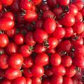訳ありミニトマト2キロ | 2kg