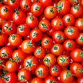 フルーツミニトマト【お試し500g】 | 500g