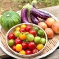 【お試し価格!!】新鮮朝どれ夏野菜3品目鮮度も味も抜群!!60サイズいっぱい | 夏野菜セット3品目