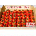 【塩トマトのようなフルーツトマト】ソムリエミニトマト ダイヤ1kg | 1kg
