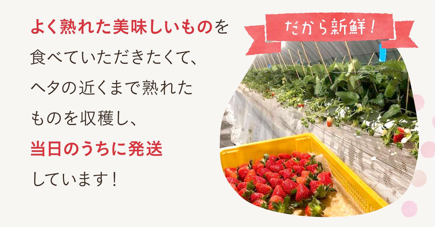食材通販の産直アウルなら山田杏奈CMで話題の酵素栽培いちごさがほのかをお取り寄せ