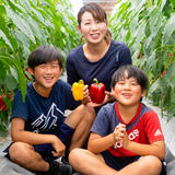 ※小粒※完熟パプリカ「和ぷりか」1.5kg 1.5kg 野菜/その他野菜通販