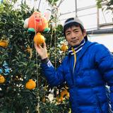 コラボ企画、幻の柑橘「木酢」+「ミニトマト」セット各500g入 木酢500g、ミニトマト500g、合計1k入 野菜/セット・詰め合わせ通販