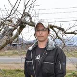 【レギュラー品】シナノゴールド 約3kg 8~12個 信州りんご 約3kg 8~12個 果物/りんご通販