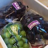 まほろばの里・たかはたのシャインマスカット 2キロ程度 果物/ぶどう通販