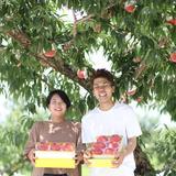 【冷蔵】新婚農家が贈る、WEDDINGピーチ♡【限定10箱】 5~7玉 果物/もも通販