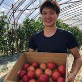 情熱トマト(約4kg) 4kg 野菜/トマト通販
