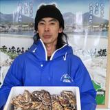バラ牡蠣 食べ放題向け いっぱい 10kg内 10kg  魚介類/牡蠣通販