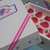 桃【贈答用 3㎏化粧箱入り】 3㎏ 9~12個 ※重さを確約するものではございません。 果物(もも) 通販