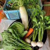 山農園の高原野菜だよー 6から8kg 果物や野菜などのお取り寄せ宅配食材通販産地直送アウル
