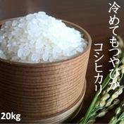 一等米!新米コシヒカリ20kg(白米の場合9kg) 果物や野菜などのお取り寄せ宅配食材通販産地直送アウル