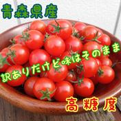【数量限定】訳ありだけど味良し 1kgセット ミニトマト 極うま 1kg 野菜(トマト) 通販