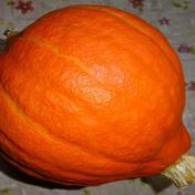 完熟コリンキーかぼちゃ 最低保証1.5kg 長野県 通販