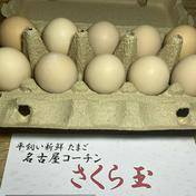 卵かけご飯に最高!名古屋コーチン さくら玉【40個】 約2kg 卵(鶏卵) 通販