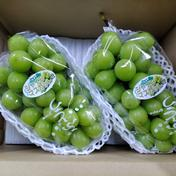 マルダイ大場農園のぶどう シャインマスカット特大2房入り(約1.8kg) 約1.8kg 果物や野菜などのお取り寄せ宅配食材通販産地直送アウル