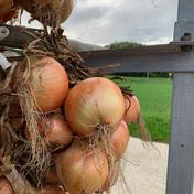 淡路島極熟玉葱訳あり3kg🧅玉ねぎ大国淡路島からの訳あり玉ねぎ3kg 訳あり玉ねぎ3kg 野菜(玉ねぎ) 通販