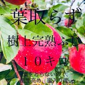 超お得‼︎ 葉取らず完熟ふじ約10キロ  約10キロ 26〜50玉入り 沼沢果樹園