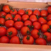ミディトマト🍅フルティカ【1.2キロ】 約1.2キロ 野菜(トマト) 通販