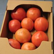 ひろちゃん野菜のトマト 約2キロ 野菜(トマト) 通販