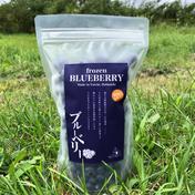 冷凍ブルーベリー【摘みたての果実を急速冷凍】 500g 果物 通販