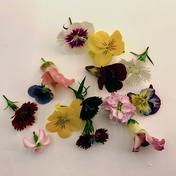 植物工場産 栽培期間中農薬不使用 エディブルフラワーMIX 20~25輪 その他(食用花) 通販