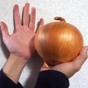 送料込み!期間、数量限定お買い得品 納豆菌栽培の淡路島玉ねぎ大玉10kg 10kg 果物や野菜などのお取り寄せ宅配食材通販産地直送アウル