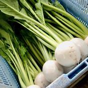 高島農産(ないとうさん家の野菜) 旬!葉っぱ付きハウス栽培の白かぶら 120サイズいっぱい詰め 120サイズいっぱい詰め(18本前後)