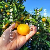 北海道・沖縄の方専用 小粒ちゃん 3キロ ゆら早生 3kg 果物や野菜などのお取り寄せ宅配食材通販産地直送アウル