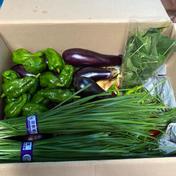 鈴木清友農園 80サイズ 無農薬野菜詰め合わせ 3kg 神奈川県 通販