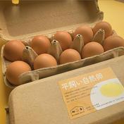 平飼い自然卵(10個入×2パック) 20個(10個入×2パック) 卵(鶏卵) 通販