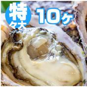 徳島県産 天然 岩牡蠣 600g~ 徳島県 通販