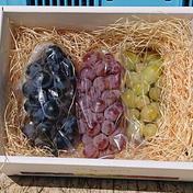 「ベリーA」「甲州」「種ありシャインマスカット」食べ比べセット 3 果物や野菜などのお取り寄せ宅配食材通販産地直送アウル
