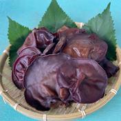 生キクラゲ 500g 野菜(きのこ) 通販