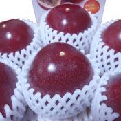 【農薬不使用】東京エコ100認証パッションフルーツ✖2箱 20~22玉 果物(その他果物) 通販