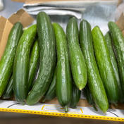 鈴木清友農園 きゅうり 2.0〜2.5kg 野菜(きゅうり) 通販