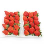 とっても貴重な10月のかおり野イチゴ(中~大サイズ) 2パック合計560g 中~大サイズ 果物や野菜などのお取り寄せ宅配食材通販産地直送アウル