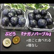 【粒パック】#種なし#皮ごと食べれる【ナガノパープル 長野県産】2パック 計500g(1パック250g×2パック) 果物(ぶどう) 通販
