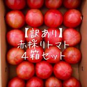 【訳あり】赤採りトマト4箱(4kg箱満杯×4) 約16kg 野菜(トマト) 通販