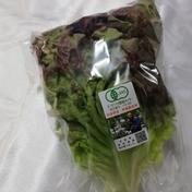 【兵庫県産】有機サニーレタス 1袋(150g前後) 1袋(150g前後) 野菜(レタス) 通販