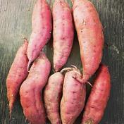 """【収穫そのまま】★数量限定★農薬除草剤不使用さつまいも """"べにはるか"""" 3kg 3kg 果物や野菜などのお取り寄せ宅配食材通販産地直送アウル"""