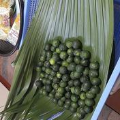 石垣島蜜蜂農園のシークワーサー 1キロ 果物(柑橘類) 通販