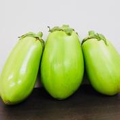 【白丸なす / トロなす】 --- 6個入り 1.2~1.5kg  ※訳あり 6個入り 1.2~1.5㎏ ※訳あり 野菜(茄子) 通販