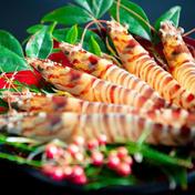 【最高の味を】活き車海老 700g(28尾前後) 上品な甘みとプリっとした美味しい車海老!!活きたままお届け!                   700g(28尾前後) 山哲水産