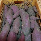 米川農園佐之衛門のさつま芋 5kg 果物や野菜などのお取り寄せ宅配食材通販産地直送アウル