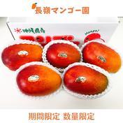 【御中元・夏ギフト】 朝採り 沖縄県産 完熟マンゴー アップルマンゴー 2~2.5KG(4~5玉) 2~2.5KG 果物(マンゴー) 通販