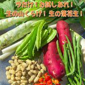 茹で用落花生2種+さつまいも+山くらげ+季節の野菜 80サイズダンボールに入るだけ 果物や野菜などのお取り寄せ宅配食材通販産地直送アウル