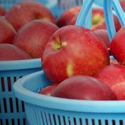 葉とらずふじを待ちきれない貴方に🍎早生ふじ🍎 4.5kg 果物や野菜などのお取り寄せ宅配食材通販産地直送アウル