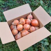 農薬を使わず育てた『子育て農家の玉ねぎ』5㎏箱 玉ねぎ 5㎏ 長野県 通販